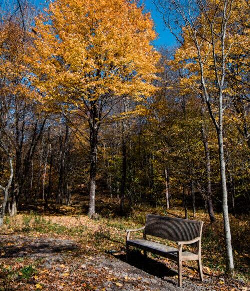Hiking Trails Property Fall