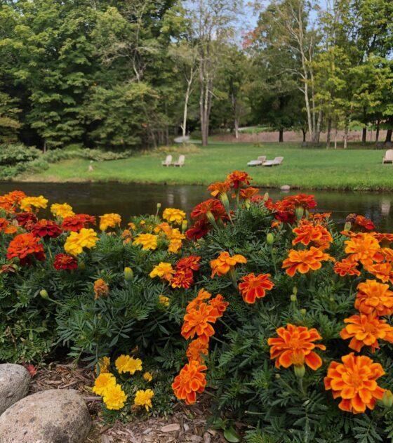 Fall Flowers Willowemoc Stream